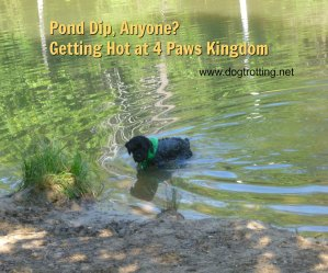dog camping in pond