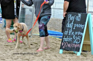 doggie paddle 7