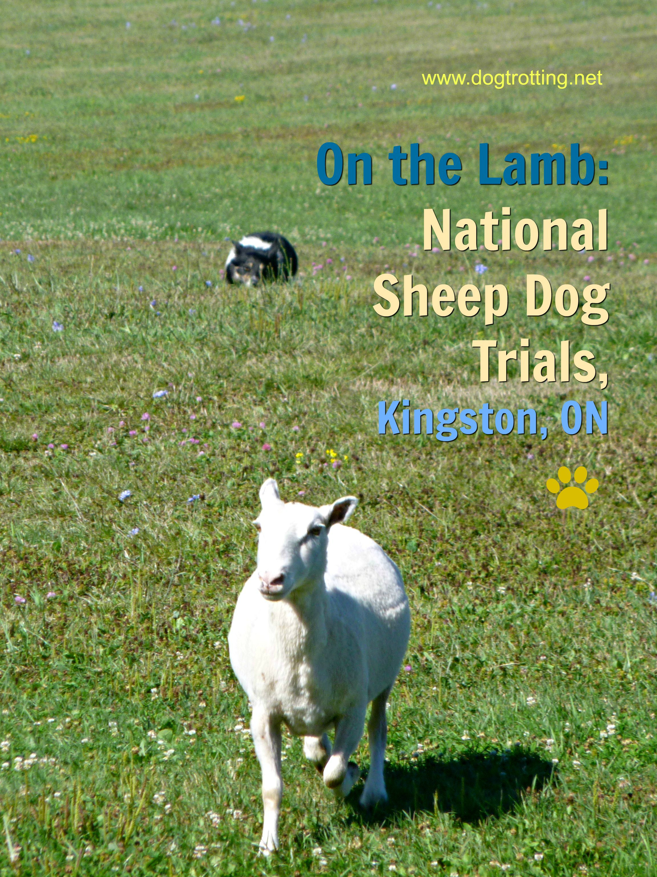 National Sheep Dog Trials, Kingston, Ontario