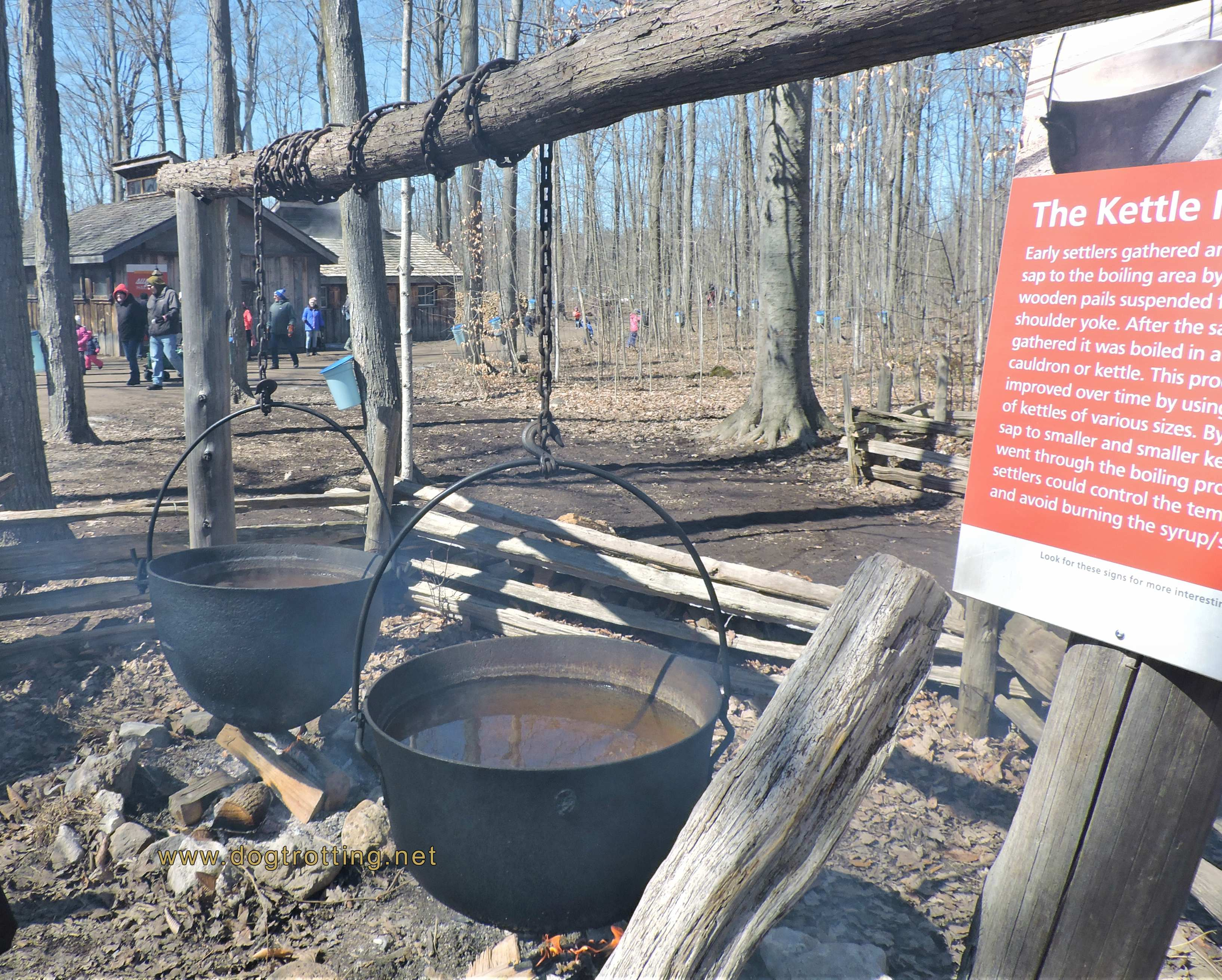 Maple Syrup Festival at Mountsberg Conservation Area, Campbellville Ontario