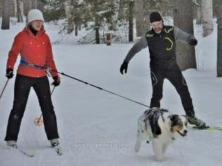 dog skijoring at Arrowhead Provincial Park, Ontario, Canada