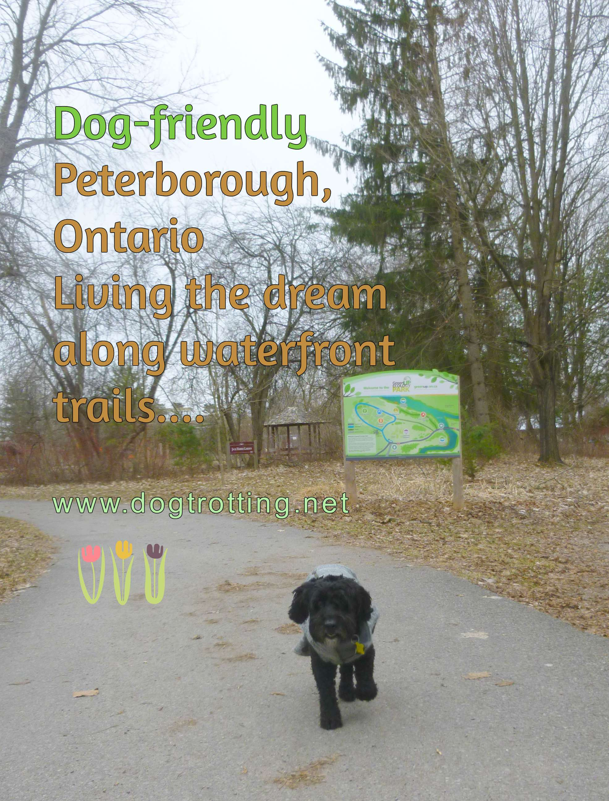 dog at GreenUP park in Peterborough, Ontario