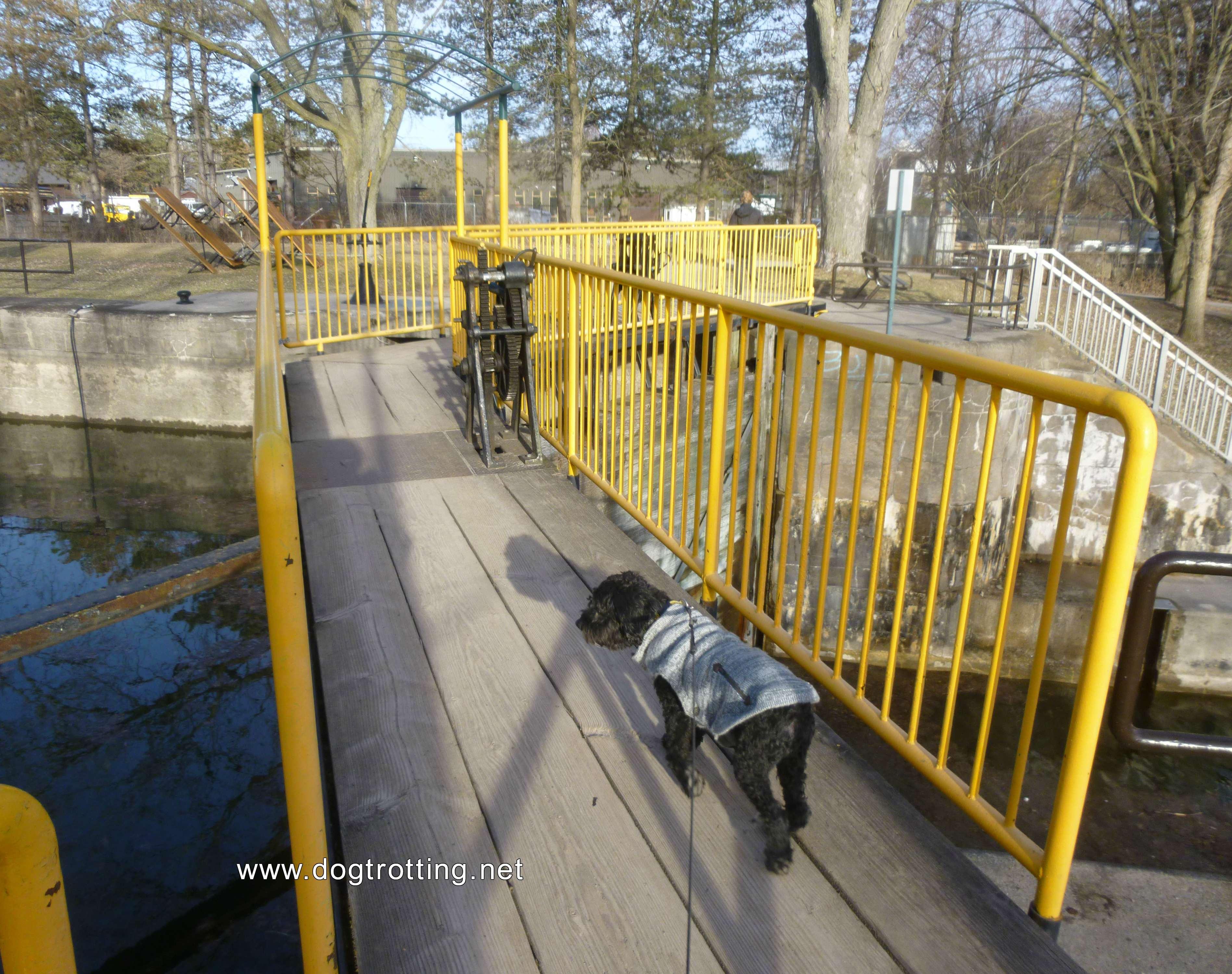 dog at lock 6 in Peterborough, Ontario