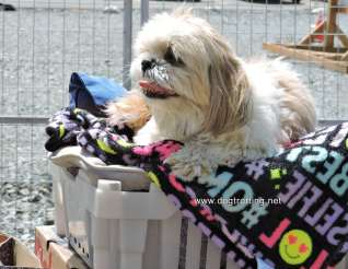 dog at Saturday Market in Sudbury Ontario