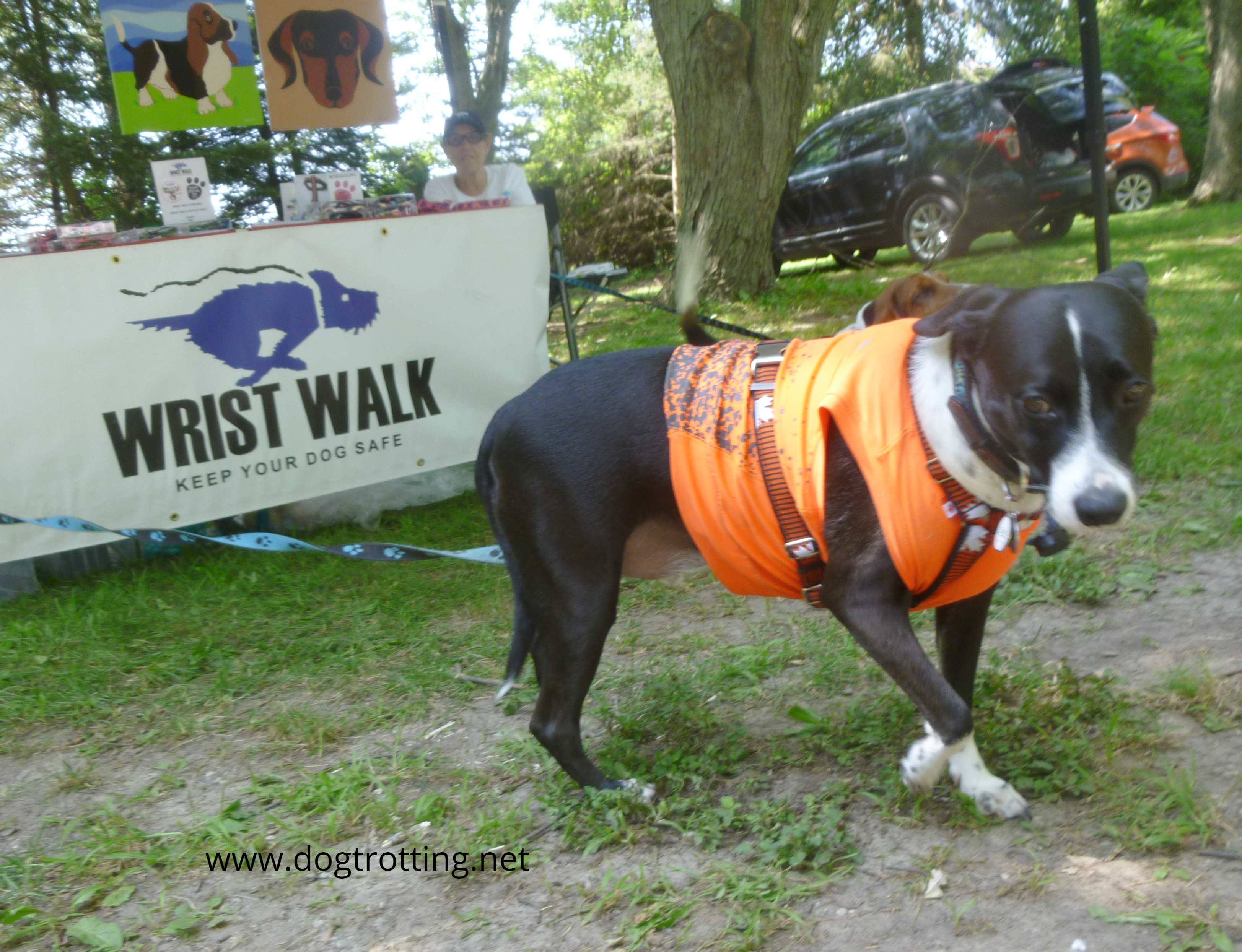 dog at Pawsitivily Elgin 2019