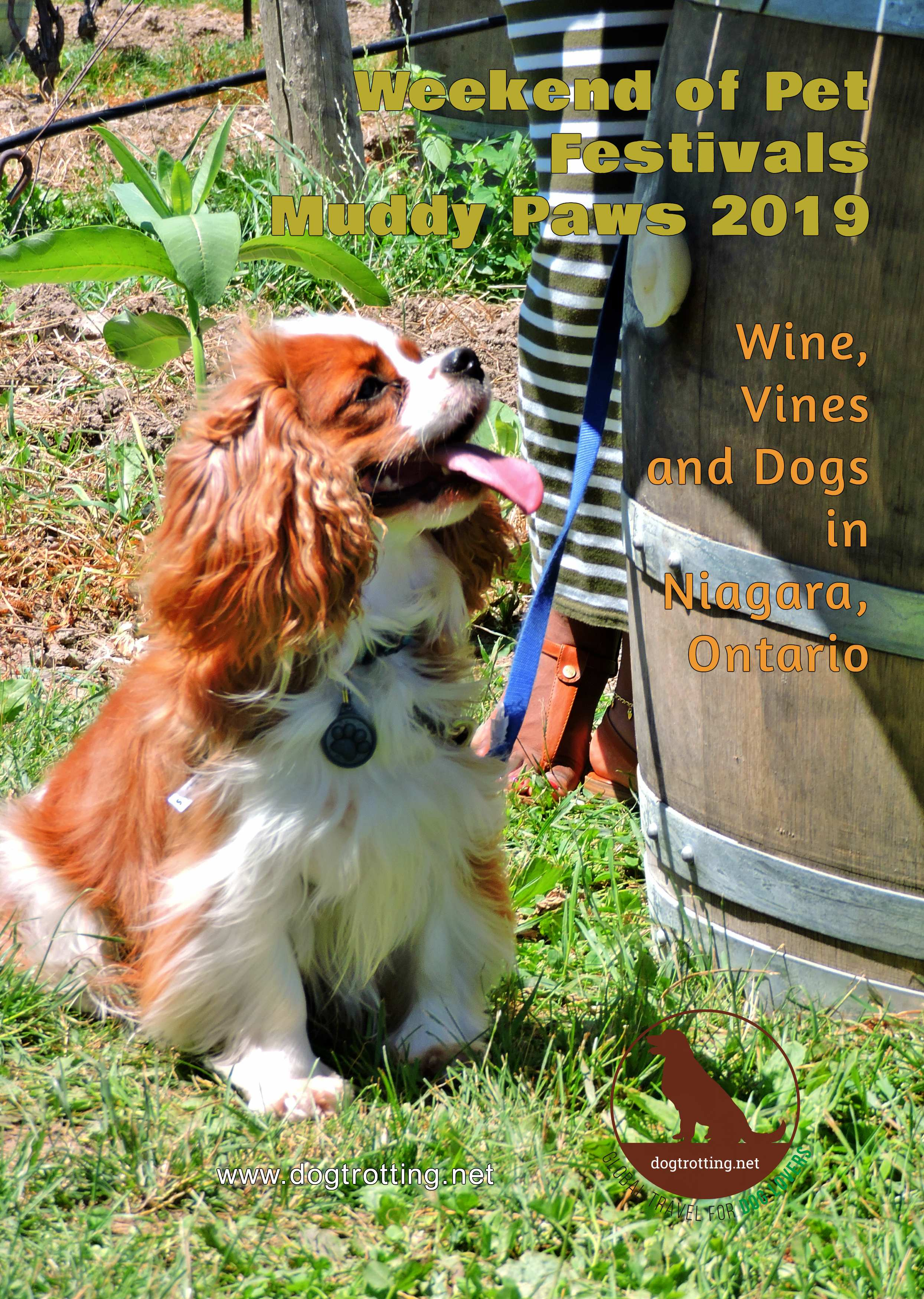 dog at Muddy Paws Wine Festival 2019