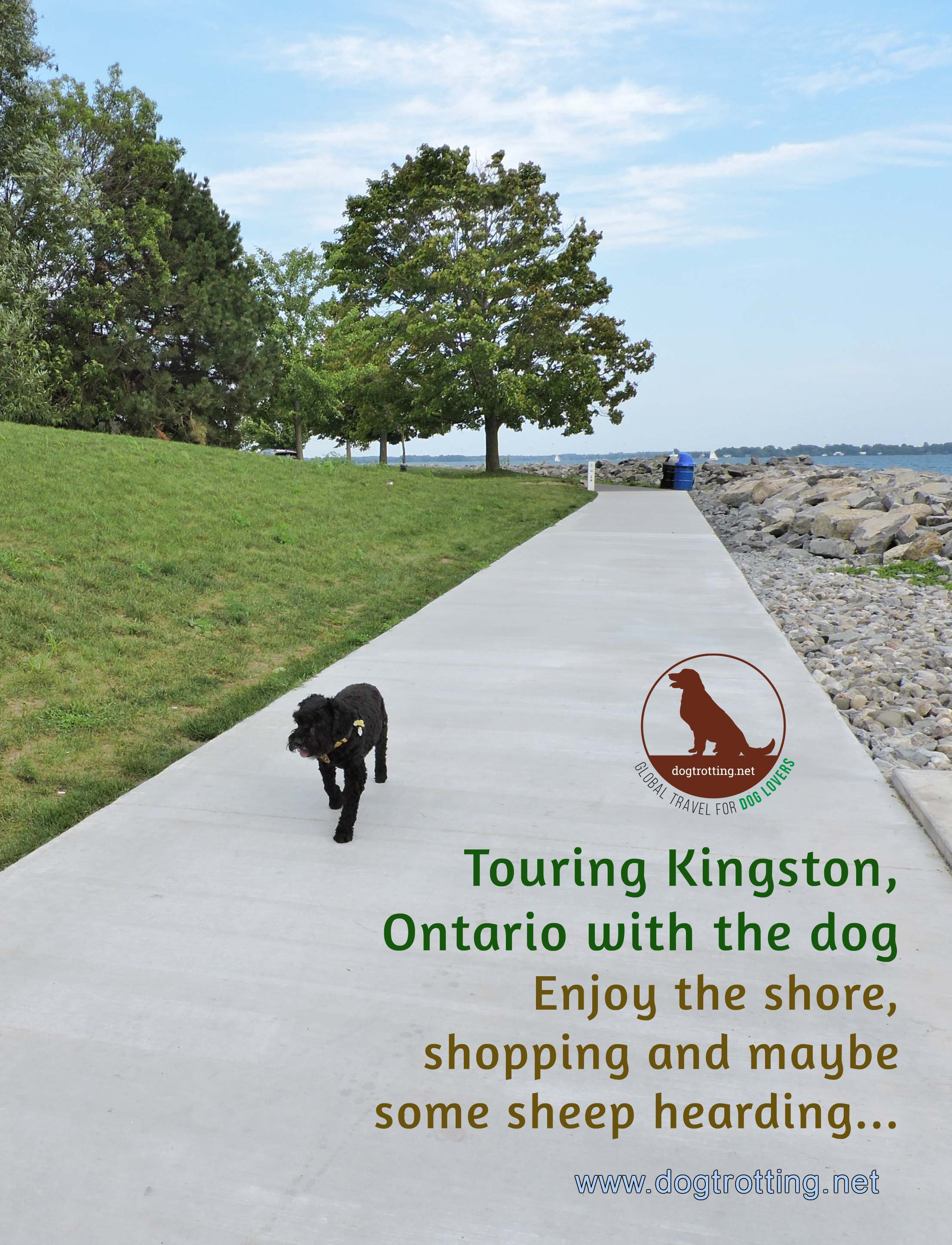 dog along lakeshore in Kingston Ontario