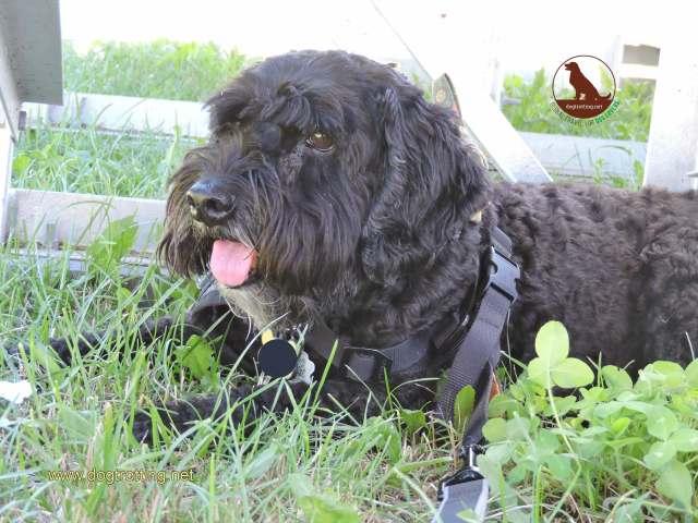 dog in kingston ontario