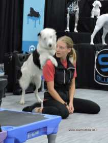 Sara Carson with trick dog Hero