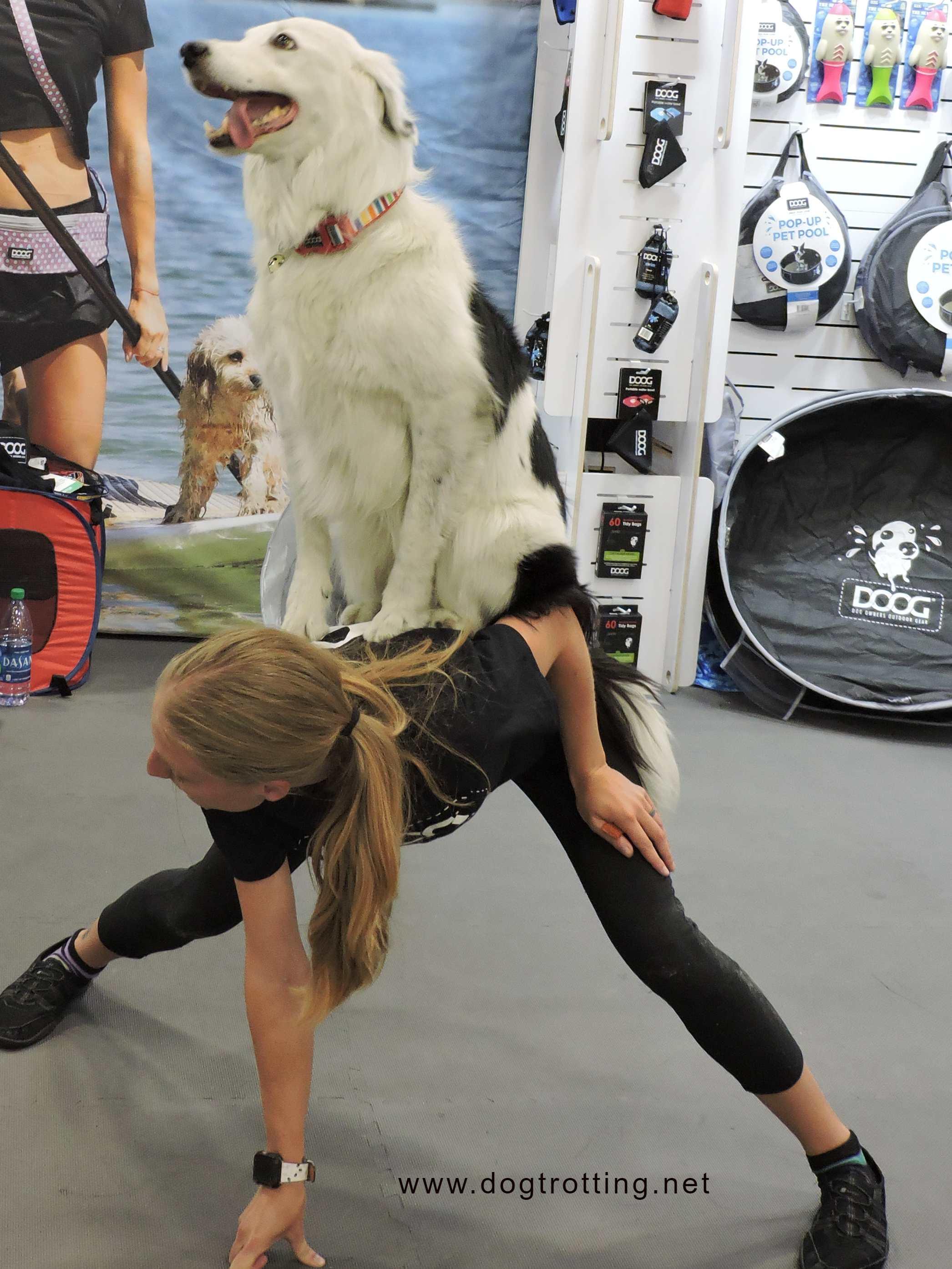 Sara Carson with trick dog Hero