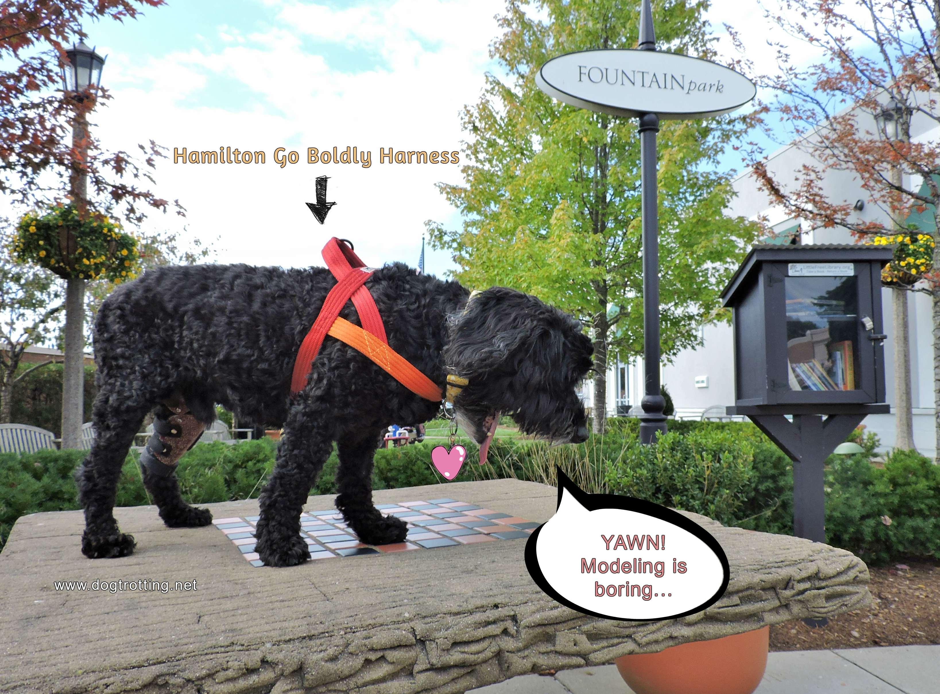 yawning black terrier on stone table wearing orange dog harness