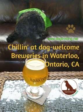 dog inside inside dog-friendly brew pub in waterloo ontario