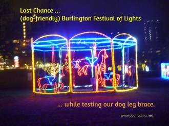 Carousel lights at the Burlington Festival of Lights