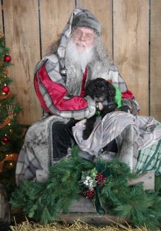 dog with Father Christmas