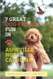 cockapoo poodle held in air and announcing dog friendly fun in Asheville North Carolina