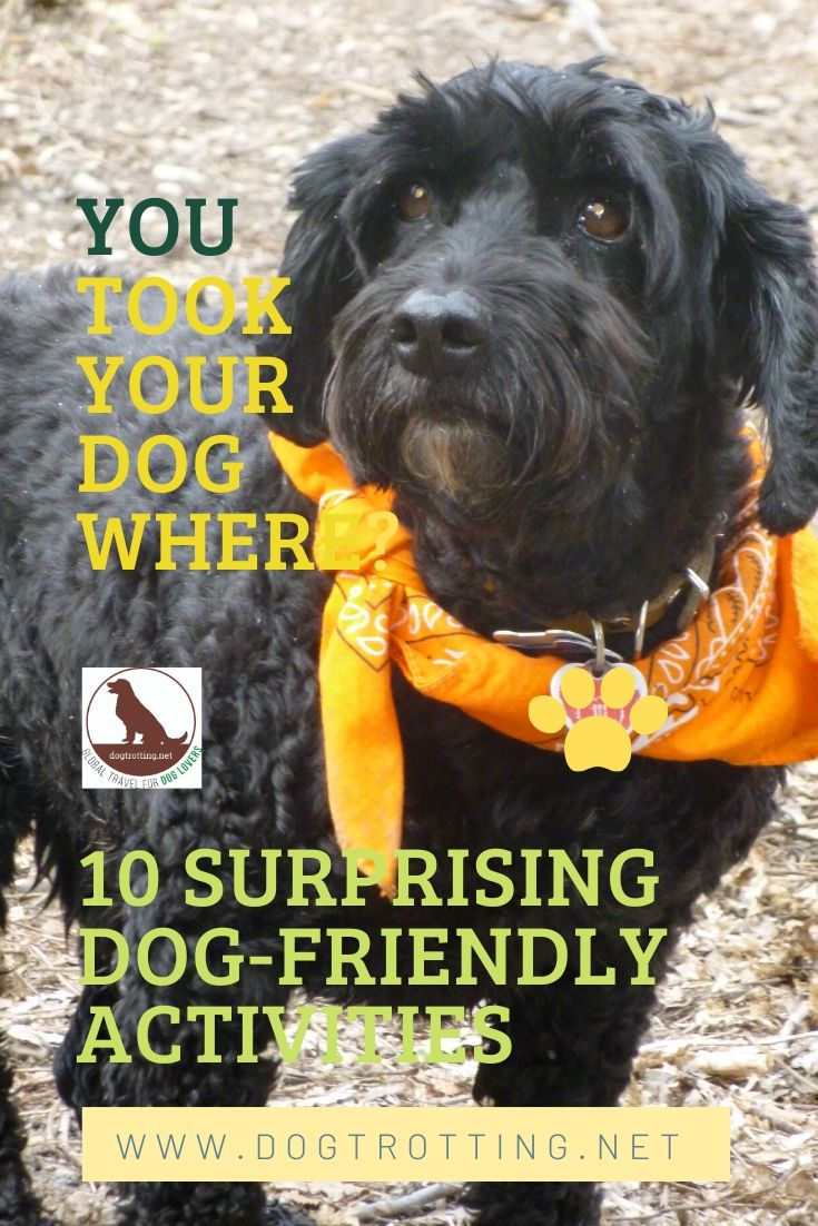 beautiful black dog with orange bandana beside text: you took your dog where? 10 surprising dog-friendly activities