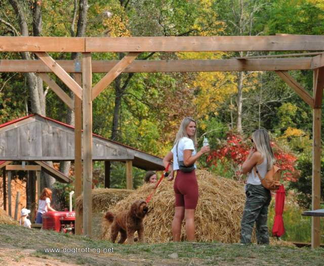 hay, brown dog and to young women at dog friendly apple orchard