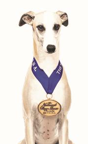 Whisky, 2018 National Dog Show Best in Show Winner