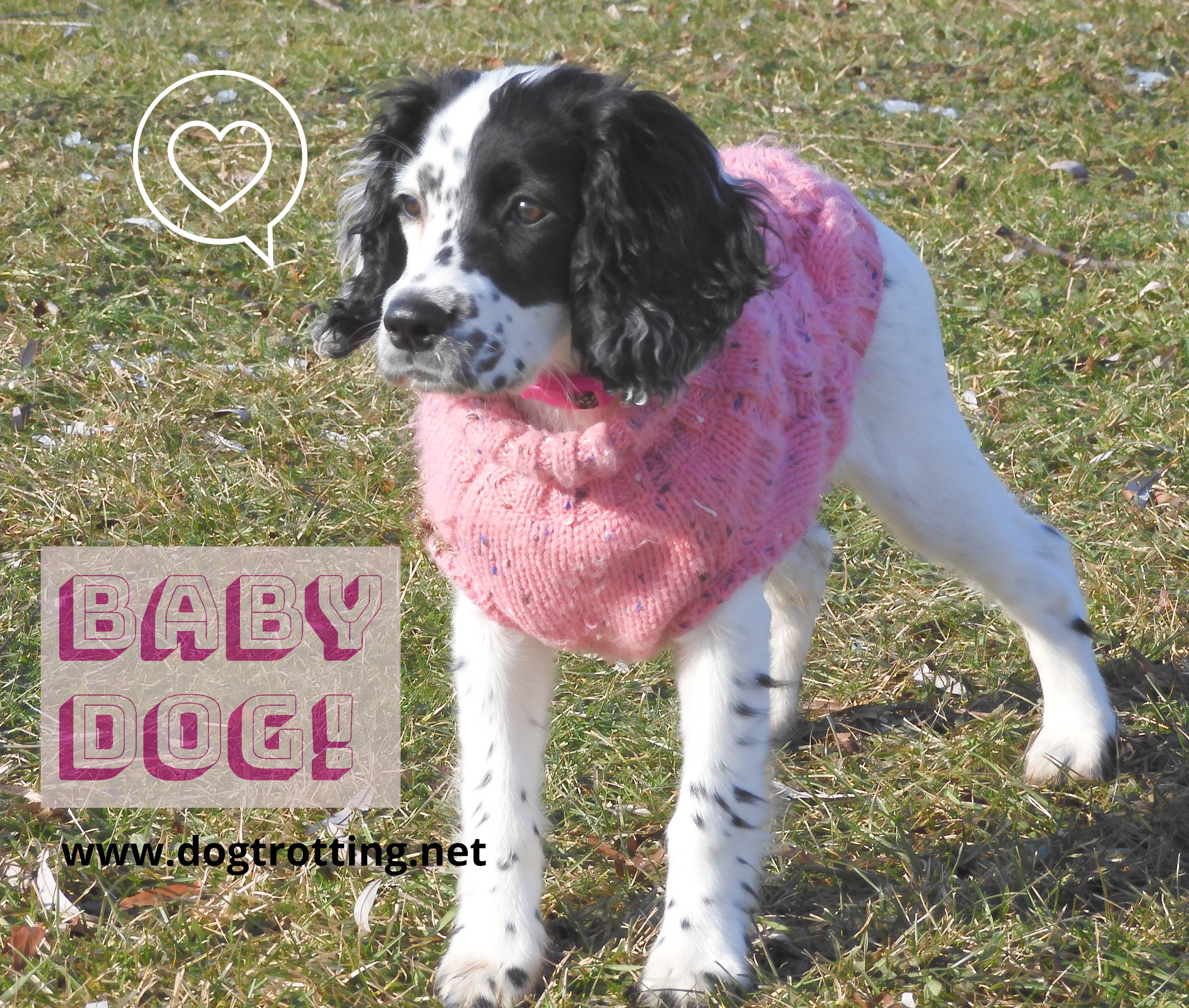 black and white puppy in pink sweater