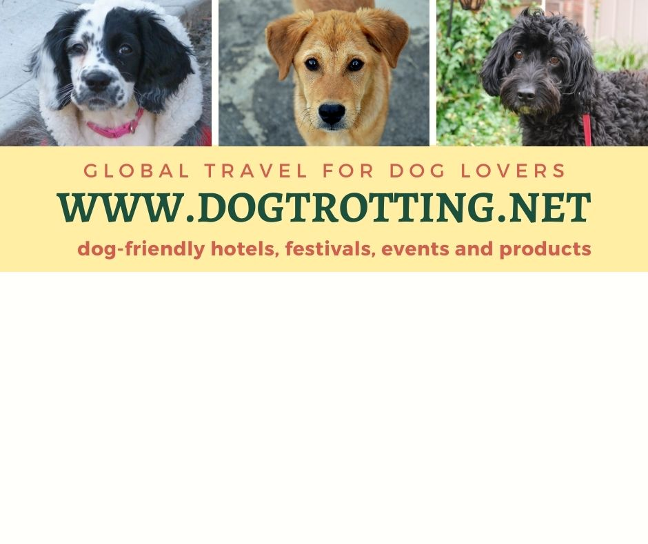 three dogs and www.dogtrotting.net Global Travel for Dog Lovers