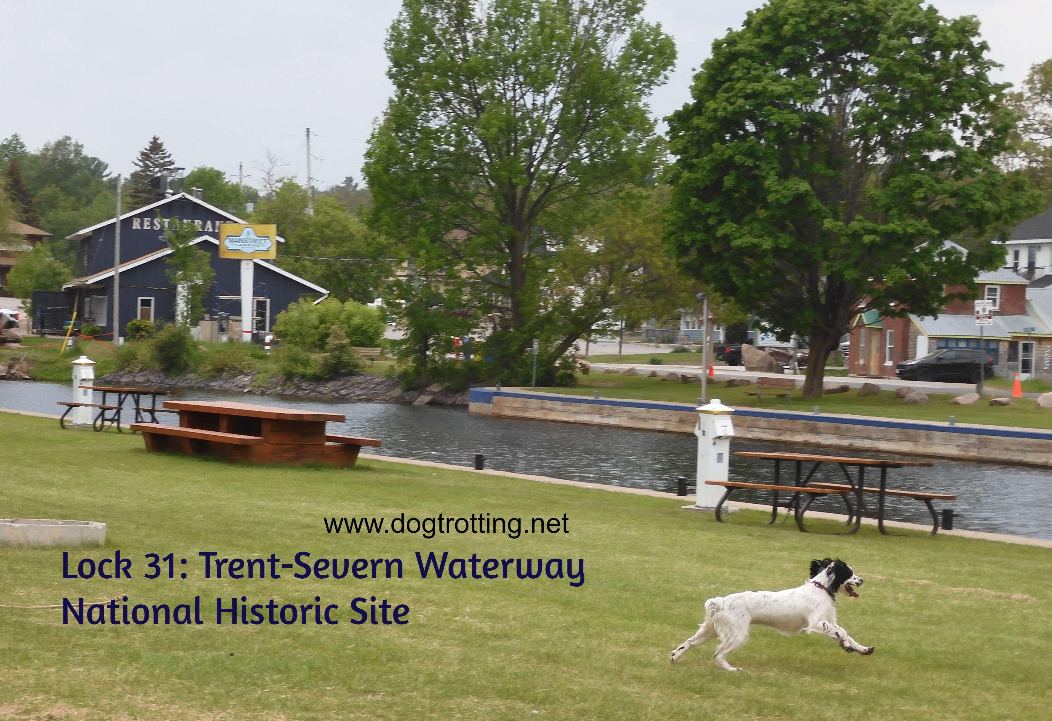 dog running through park in Buckhorn Ontario