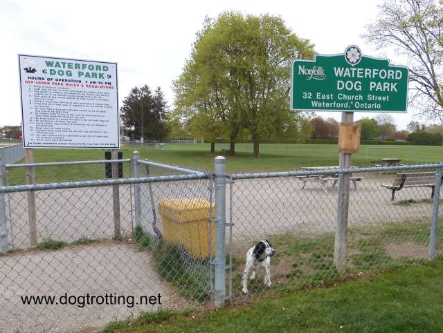 dog at Waterford Dog Park