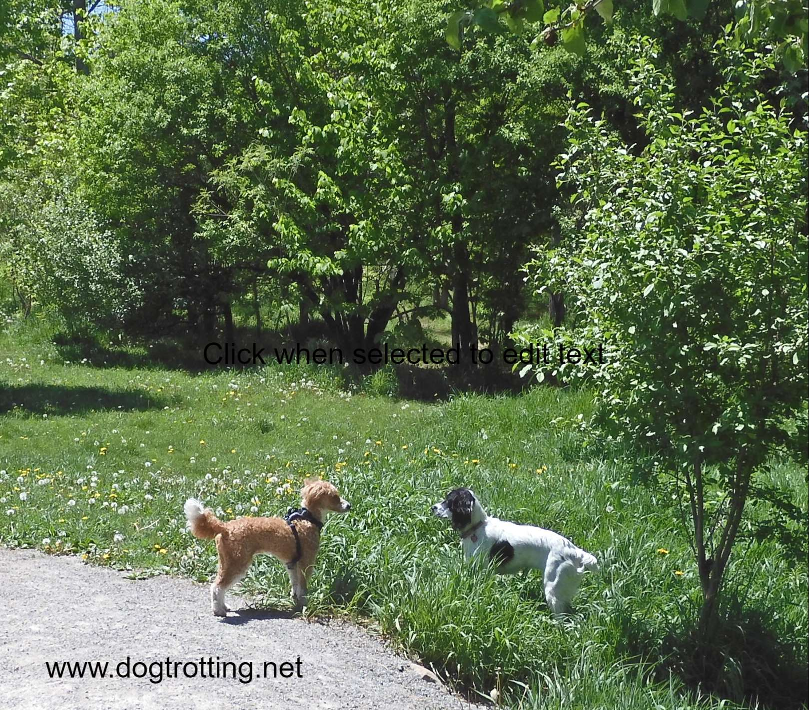 two small dogs facing each other in wooded off leash dog park