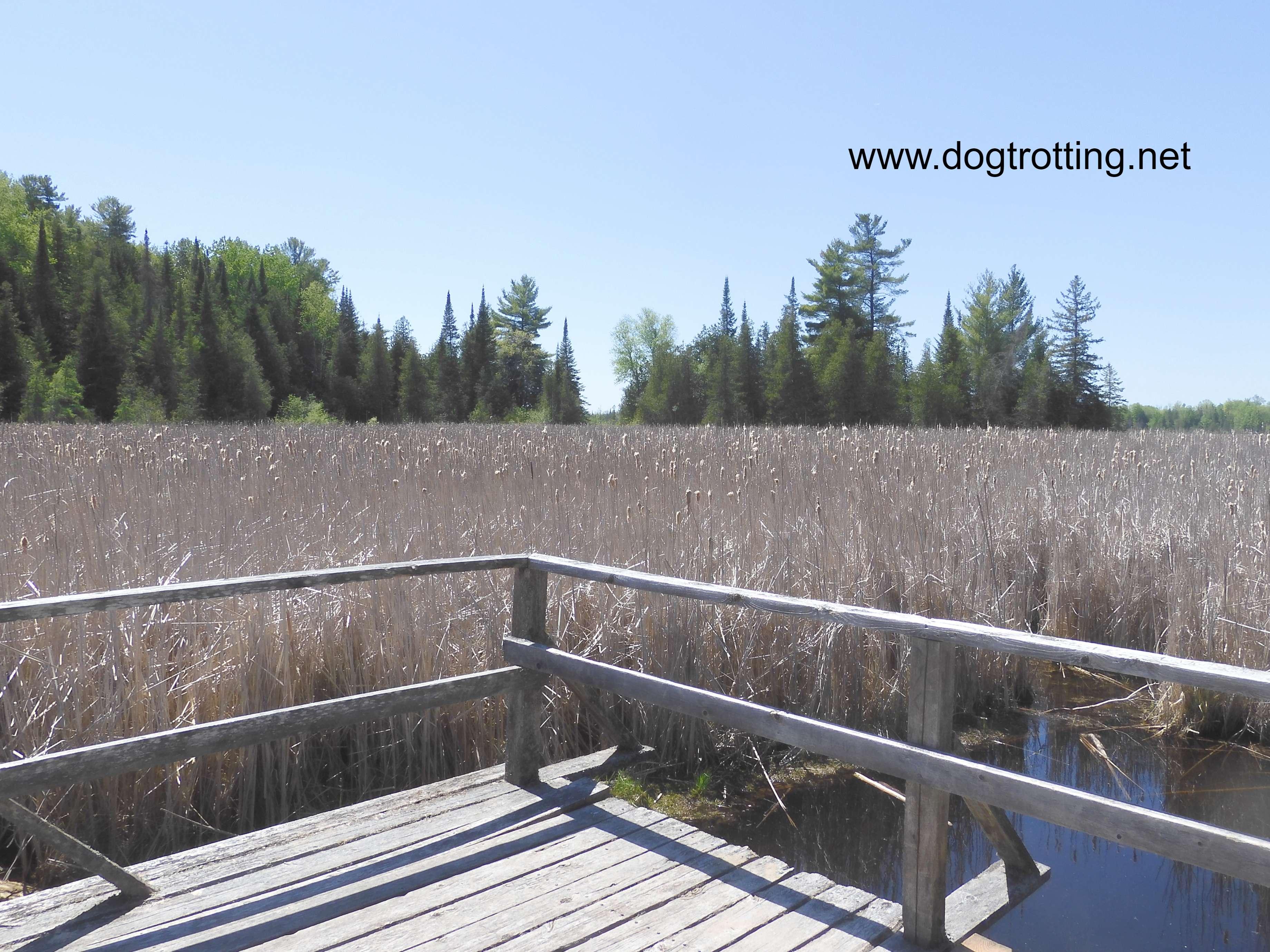 board walk over marshlands in Ontario