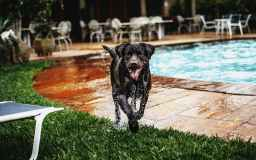 wet black dog sticking tongue out beside swimming pool