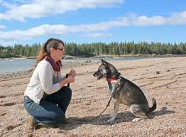 Train Your Dog Faster with Mini-Lessons, Even If You're Too Busy!