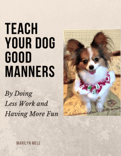 Teach your dog good manners