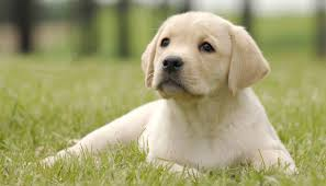 Puppies Need Boundaries