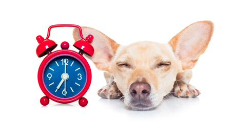 Your Timing is Your Message in Dog Training