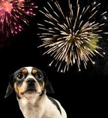 Why Dogs Fear Fireworks and How You Can Help