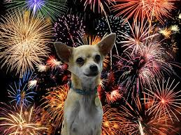 Dogs fear fireworks