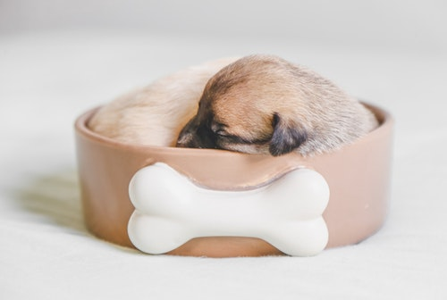 puppy sleeping in a bowl