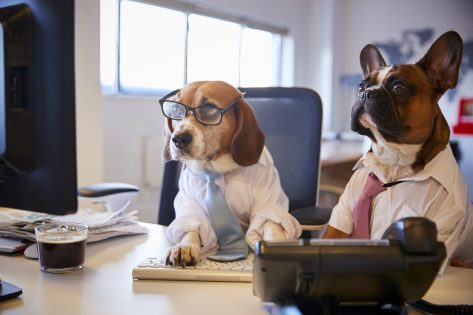 dogs working at the computer