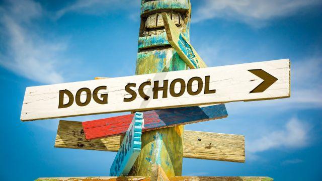 dog school sign