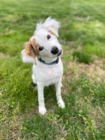 attention-seeking dog Radar
