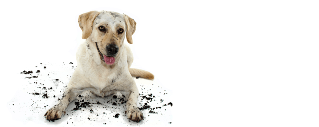 Dog with dirt