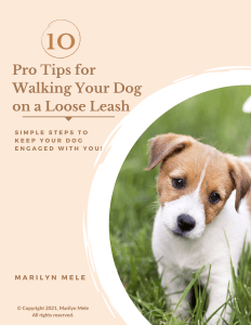 10 Pro Tips for Loose Leash Walking