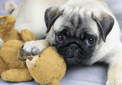How to Train a Dog With Mom's Goldilocks Rule