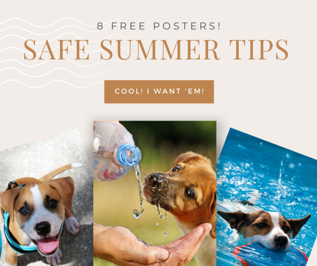 essential formulas for every dog parent with 8 Free Posters Safe Summer Tips