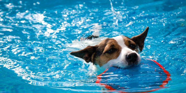 5 Essential Formulas for Every Dog Parent  That Help Ensure a Dog Safe Summer