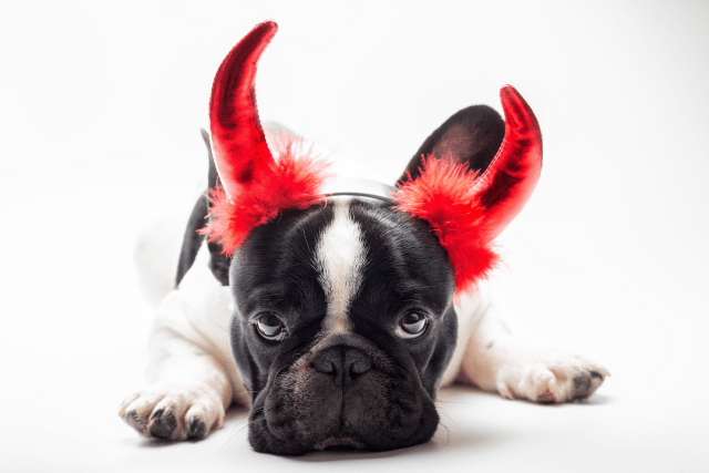 attention-seeking dogs aren't being naughty