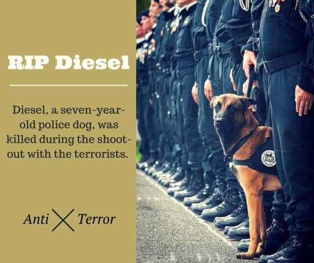 paris dog Diesel