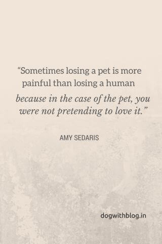Sometimes losing a pet is more painful than losing a human