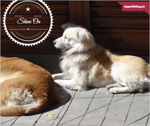Himalaya street dogs, bring your own sunshine