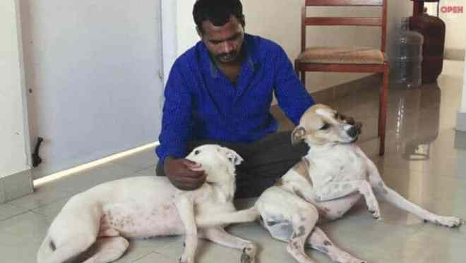 Pune ambulance for dogs
