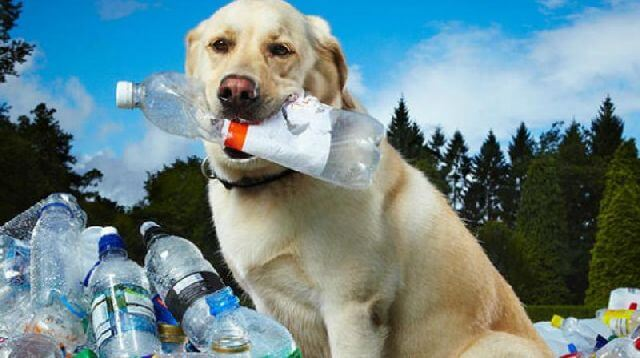 dog plastic recycle